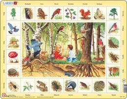 Výukové puzzle Život v lese