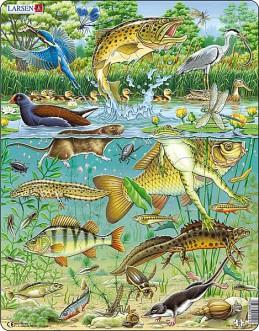 Výukové puzzle Život v rybníce