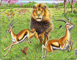 Výukové puzzle Lev na lovu