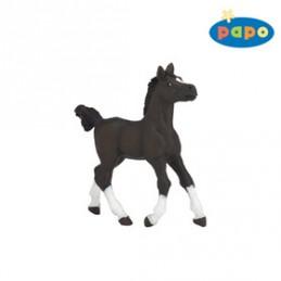 Arabský kůň mládě - Chabon Michael