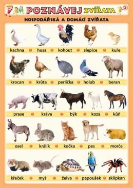 Poznávej zvířata - Hospodářská a domácí zvířata - Kupka a kolektiv Petr